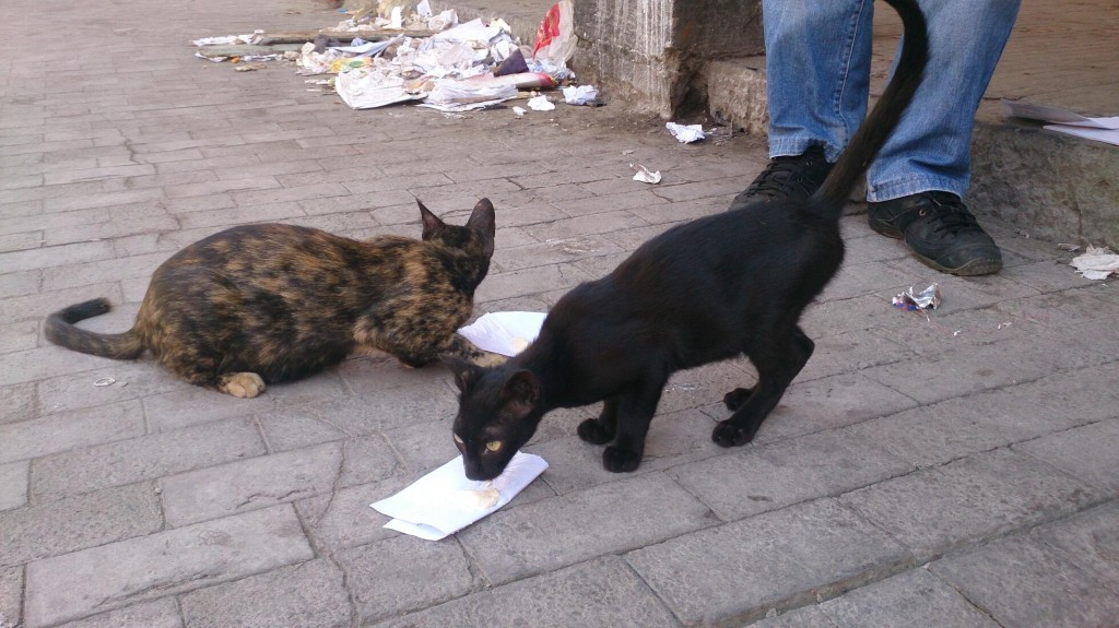 Passing time with the cats in the Customs House while waiting.