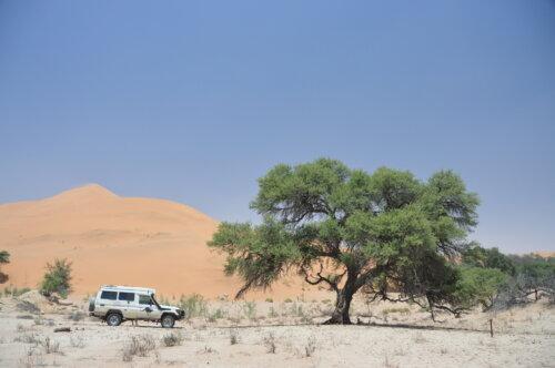 Edge of the Dunes
