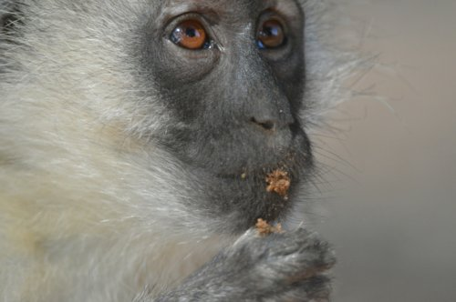 Ahhh....the puke monkeys...but that is another story!