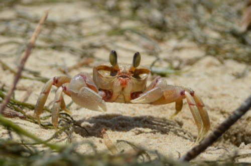 I don't think the crabs appreciated clumping great feet on their sand...