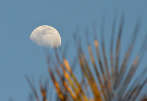 Daytime moon over palms, Tanzania