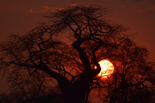 Sunset Baobab, South Luangwa